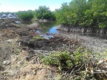 La Restinga Deforestacion 2