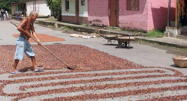cacao_empresa_abraxas5